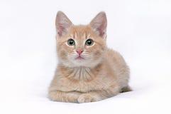 Retrato do gatinho vermelho Fotografia de Stock Royalty Free