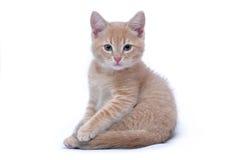 Retrato do gatinho vermelho isolado em um fundo branco Imagens de Stock