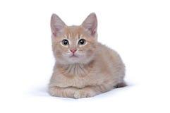 Retrato do gatinho vermelho pequeno bonito Fotos de Stock Royalty Free