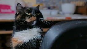 Retrato do gato filme