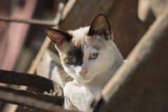 Retrato do gato Imagem de Stock