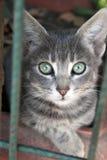 Retrato do gato bonito Imagens de Stock Royalty Free