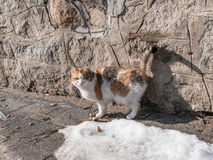 Retrato do gato bonito do gengibre no asfalto Fotografia de Stock Royalty Free