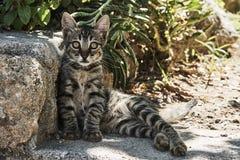 Retrato do gato cinzento imagem de stock