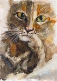 Retrato do gato da aquarela Imagem de Stock Royalty Free