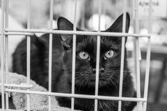 Retrato do gato do abrigo Fotografia de Stock
