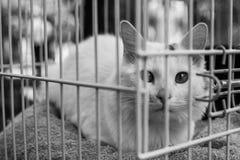 Retrato do gato do abrigo Fotografia de Stock Royalty Free