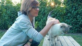 Retrato do gato doméstico no luminoso fora no jardim home, fundo verde natural, olhando afastado, frio tonificado filme