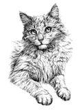 Retrato do gato Ilustração desenhada mão Fotografia de Stock