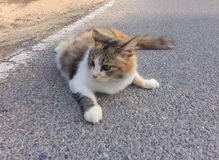 Retrato do gato marrom, preto e cinzento na estrada Imagem de Stock Royalty Free