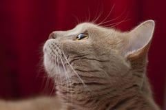Sistema ótico do gato Imagens de Stock