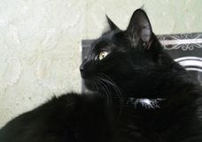 Retrato do gato, o gato girado afastado fotografia de stock royalty free