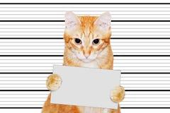 Retrato do gato-prisioneiro que realiza em suas patas uma bandeira vazia fotos de stock
