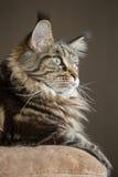 retrato do gato verticalmente Fotografia de Stock Royalty Free