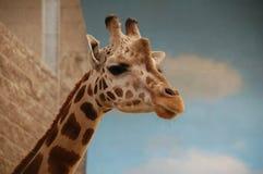 Retrato do girafa no jardim zoológico foto de stock royalty free