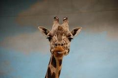 Retrato do girafa no jardim zoológico imagens de stock royalty free