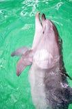 Retrato do golfinho comum na água de um dolphinarium imagem de stock