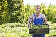 Retrato do homem seguro que guarda a caixa de plantas em pasta no jardim Fotos de Stock