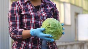 Retrato do jardineiro fêmea de sorriso que guarda a couve colhida fora da estufa video estoque