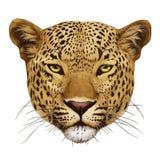 Retrato do leopardo ilustração do vetor