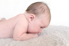 Retrato do 1 mês de olhos azuis bonitos do bebê que encontra-se na barriga Fotos de Stock Royalty Free