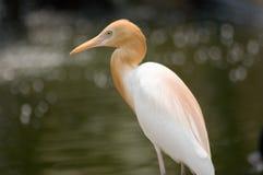 Retrato do pássaro Imagens de Stock