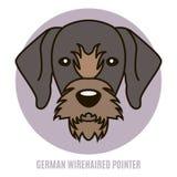 Retrato do ponteiro wirehaired alemão Ilustração do vetor no st Foto de Stock
