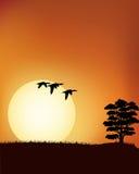 Retrato do por do sol Foto de Stock Royalty Free