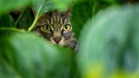 Retrato do `s do gato fotografia de stock
