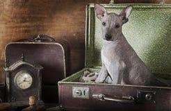 Retrato do Sepia de um cachorrinho Foto de Stock