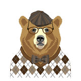 Retrato do urso Imagem de Stock Royalty Free