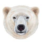 Retrato do urso polar ilustração royalty free