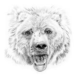 Retrato do urso tirado à mão no lápis Fotos de Stock Royalty Free