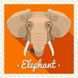 Retrato do vetor de um elefante Retratos simétricos dos animais Ilustração do vetor, cartão, cartaz ícone Cara animal Imagens de Stock Royalty Free