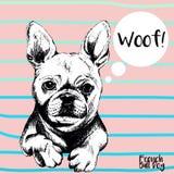 Retrato do vetor do buldogue francês Ilustração tirada mão do cão de estimação Imagem de Stock