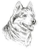 Retrato do vetor do desenho da mão do cão de puxar trenós siberian Fotos de Stock Royalty Free