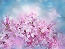 Retrato do vintage com lilac Imagem de Stock