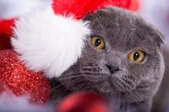 Retrato do Xmas de um gato fotos de stock