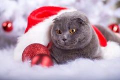 Retrato do Xmas de um gato fotografia de stock