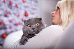 Retrato do Xmas de um gato imagem de stock royalty free