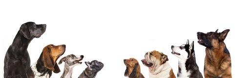Retrato dos cães no perfil imagem de stock