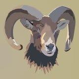 Retrato dos carneiros Retrato ilustrado vetor do Ram ou dos carneiros Imagens de Stock
