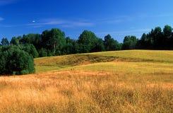 Retrato e céus do verão Imagens de Stock