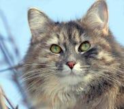 Retrato en colores pastel hermoso del gato fotografía de archivo