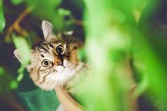 Retrato engraçado de um gato imagens de stock
