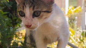 Retrato engraçado e curioso do gato do bebê Um fim acima da vista filme
