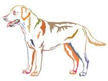 Retrato ereto decorativo colorido de labrador retriever Imagem de Stock