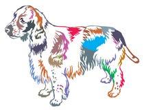 Retrato ereto decorativo colorido do spaniel de Springer inglês Imagens de Stock