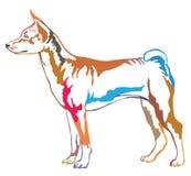 Retrato ereto decorativo colorido do vetor de Basenji Imagens de Stock Royalty Free