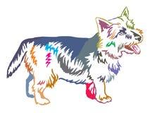 Retrato ereto decorativo colorido do vetor de Norwich Terrier Imagem de Stock Royalty Free